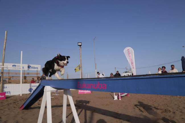 "Córdoba Open, el primer torneo de tenis ""dog friendly"""